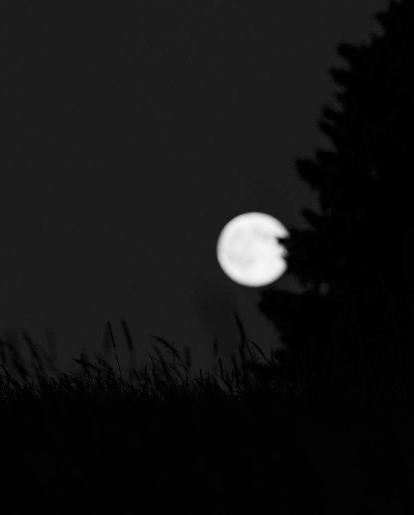 sun-moon-torup_0050