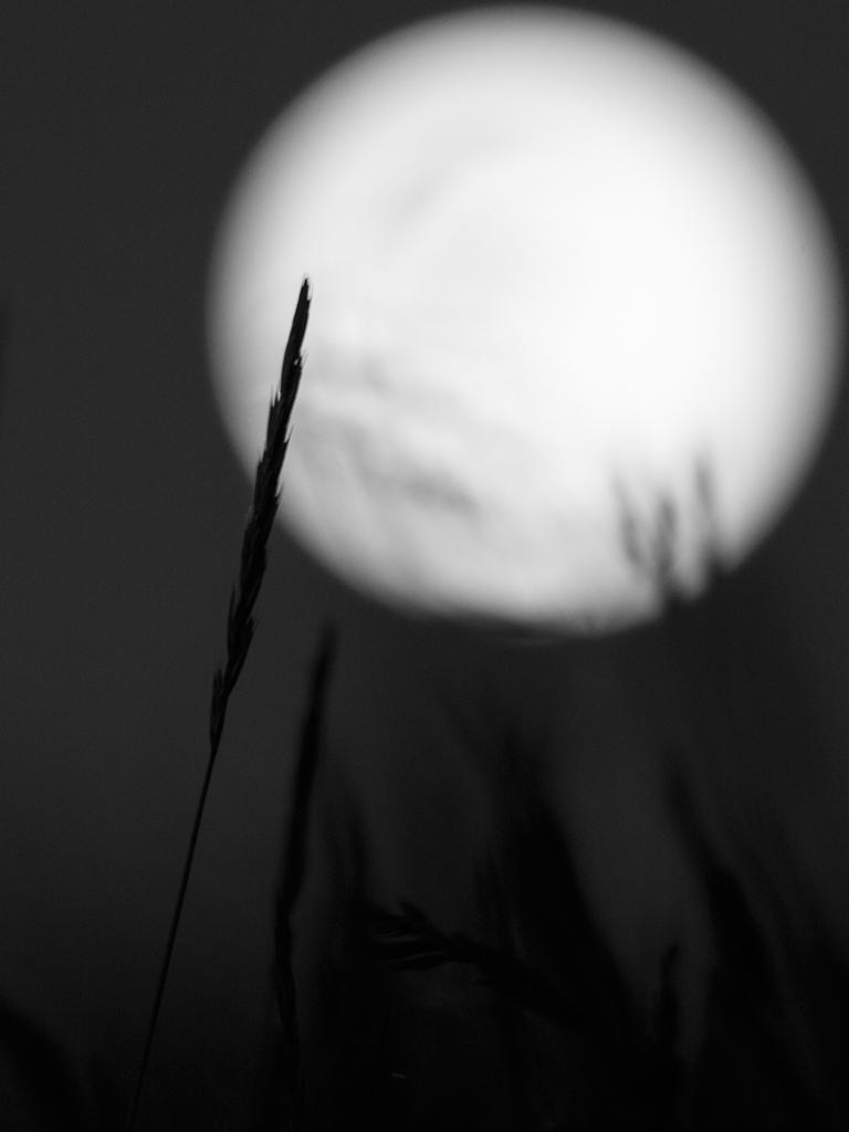sun-moon-torup_0058