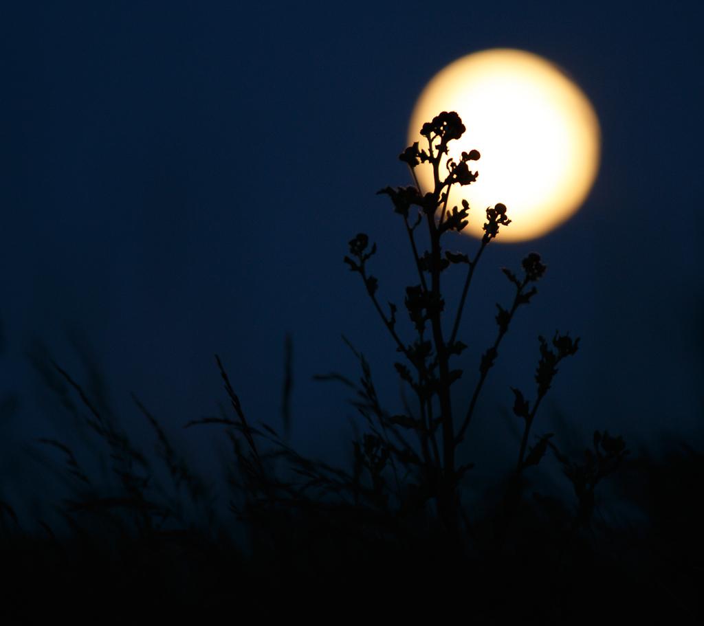 sun-moon-torup_0060